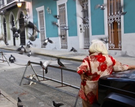 Puerto Rico's cat lady watches in amusement at the pigeons.