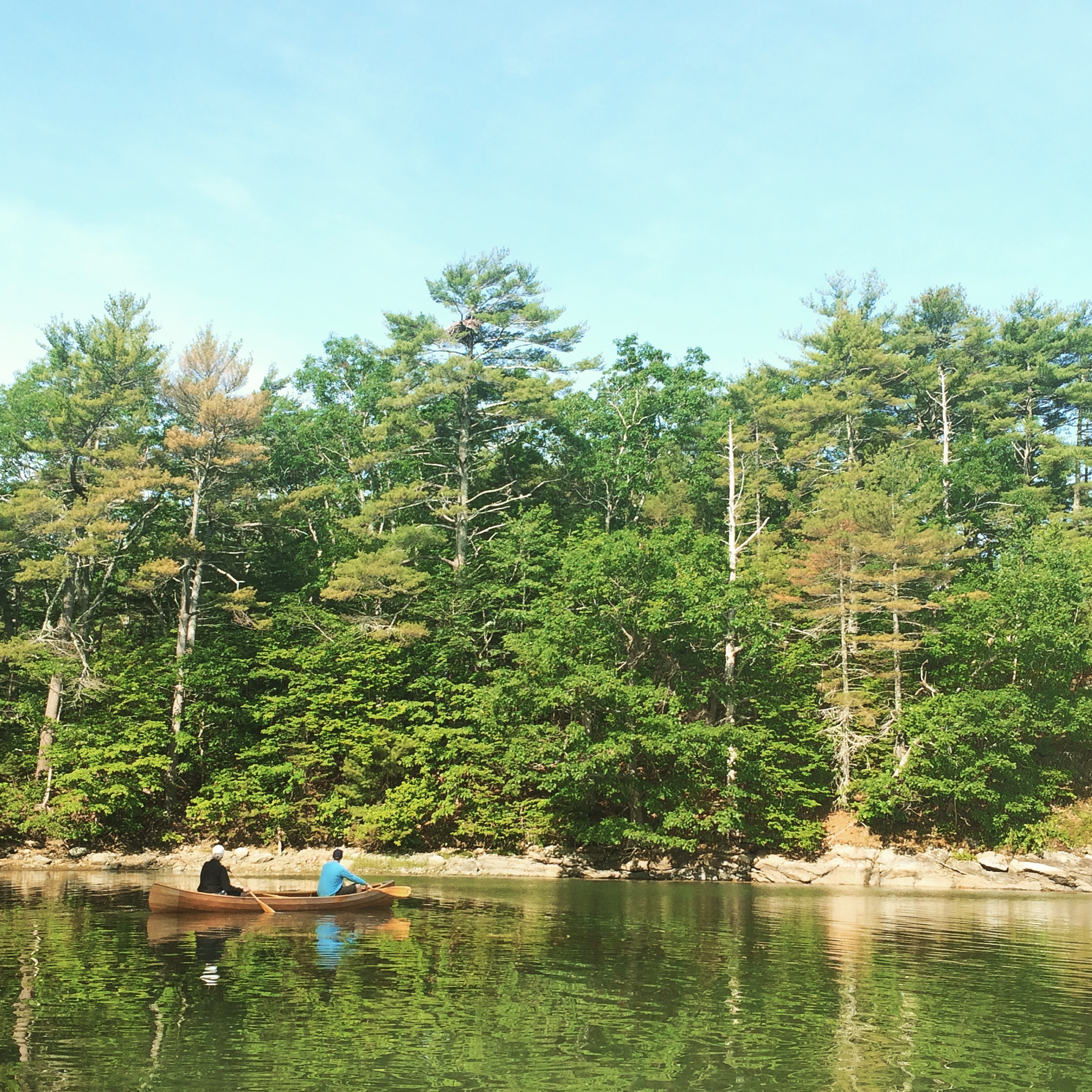 Paddling in the Damariscotta with an eagle's nest as a point of interest.